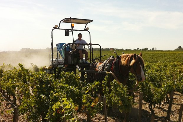 Биодинамический метод виноделия