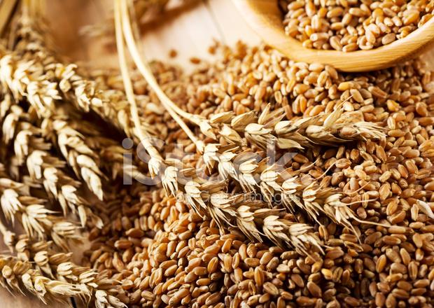 Как приготовить классический самогон из пшеницы