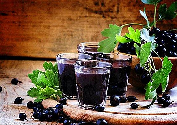 Рецепт самой вкусной наливки из чёрной смородины