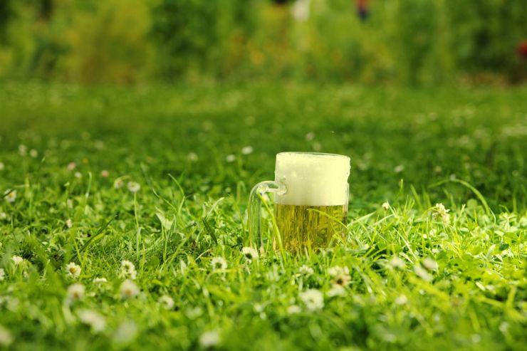 Как в пиве воссоздается терруар