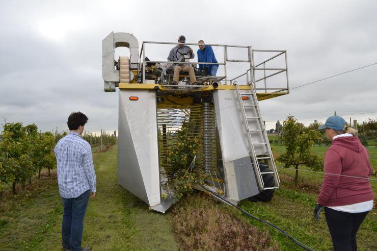 Учёные: способ сбора яблок не влияет на качество сидра