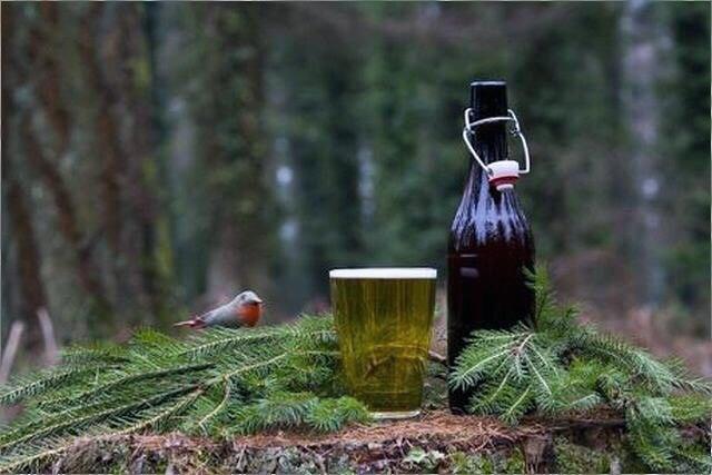 Хвойное пиво: новое открытие старинного европейского рецепта