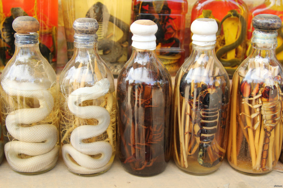 Водка со змеей: история появления напитка, производители