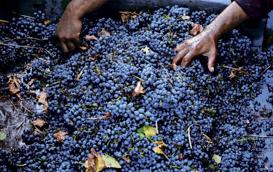 Вино из воды: факт, который отказываются признавать виноделы во всем мире