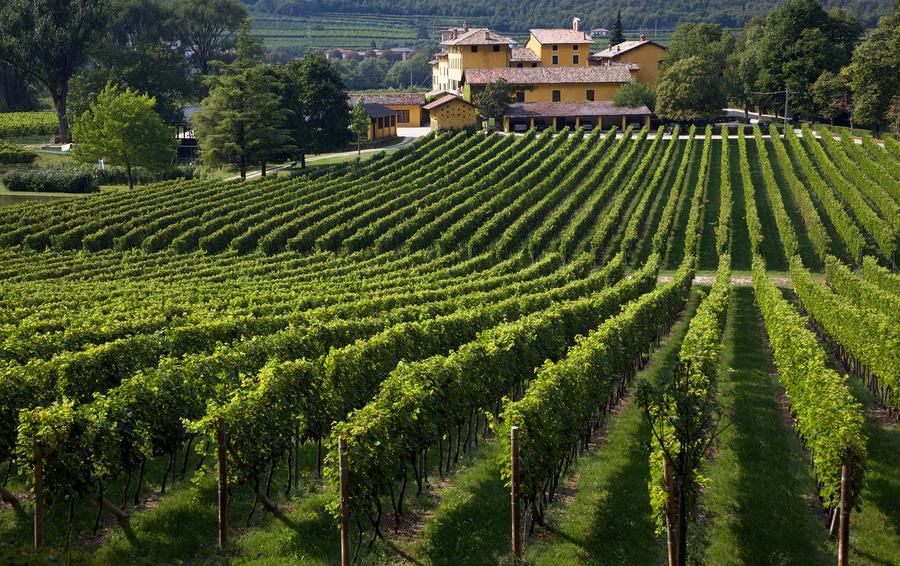 Как лондонские финансисты создали вино лучше французского?
