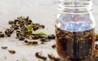 Настойка на пчёлах — крепкое лекарство от всех болезней