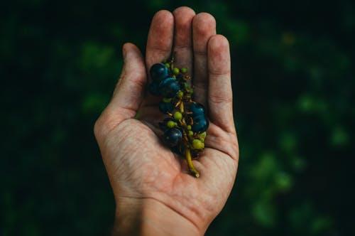 Что думают производители: результаты опроса виноградников
