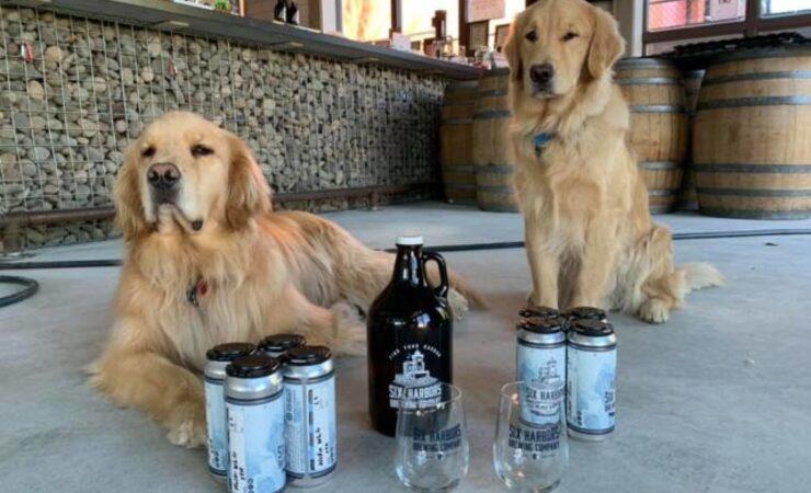 BrewDog поддержала бездомных собак лимитированным выпуском IPA