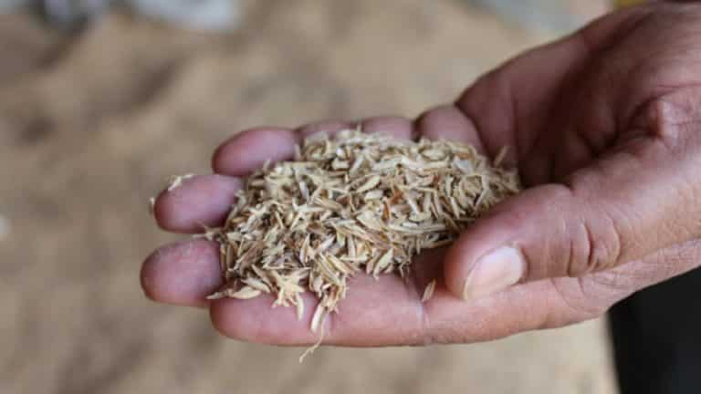 Как работает рисовая лузга (шелуха) в пивоварении