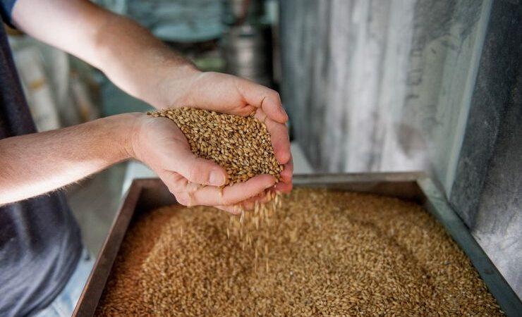 Австралия наращивает поставки ячменя в Индию, где быстро растёт спрос на крафтовое пиво
